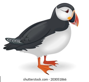 Vector illustration of a puffin