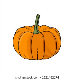 Vector illustration of pumpkin, isolated on white background. Vegetable from the farm. Organic food.