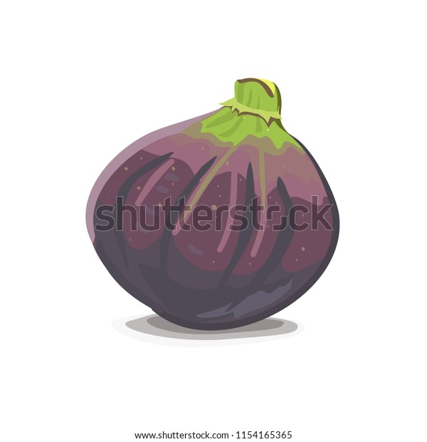 Vector illustration of a purple fig fruit with a green top isolated with shadow
