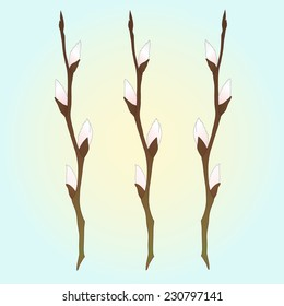Vector illustration of pussy willow branches