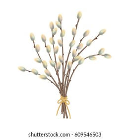 Vector illustration of pussy willow branches on a white background