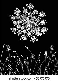 Vector illustration of Queen Anne's Lace on black.