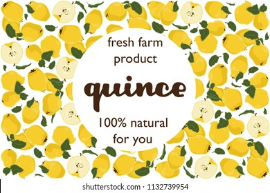 vector illustration of quince and leaf design with lettering quince background white and fruit and text fresh farm product 100% natural for you EPS10