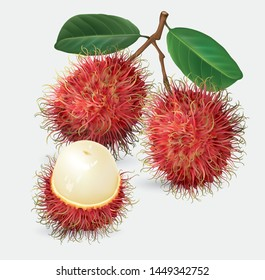 Vector illustration of rambutan, made in a realistic style. Isolated objects on a white background.
