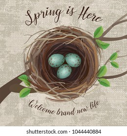 Vector illustration of realistic bird's nest with blue speckled eggs, with message for arrival of Spring or Easter. Top View.