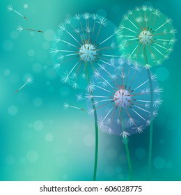 Vector illustration of realistic dandelion with flying buds