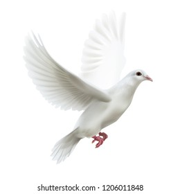 Vector illustration of realistic free flying dove right side view isolated on white background
