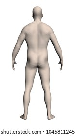 Vector illustration of a realistic man. The naked man stands in a pose with his arms and legs spread. Physiologically developed structure of a man. 3D. Back view.