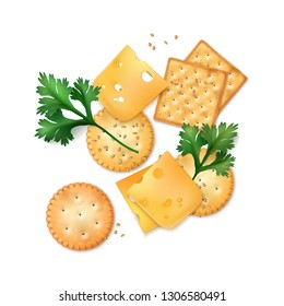 Vector illustration of realistic round and square crackers with fresh parsley leaves, slices of cheese and sesame seeds isolated on white background, top view