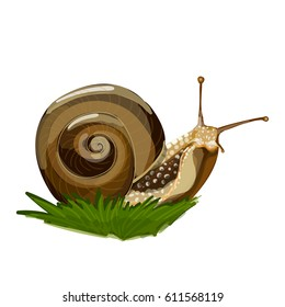 Vector illustration of realistic snail on the grass. Isolated on transparent background. Beautiful snail clip-art for your design.