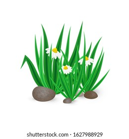 Vector illustration of realistic spring green grass with blooming Bellis flowers and stones isolated on white background. Icon of bush of grass for home decor, posters, advertisement, garden element.