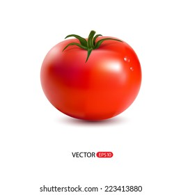 Vector illustration of red  big fresh tomato isolated on white background.