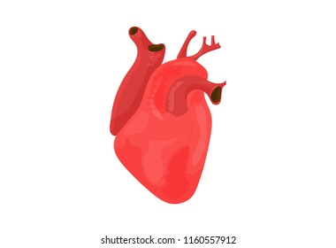 Vector illustration: red heart organ isolated. Open Anatomical Heart icon.