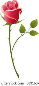 vector illustration red rose on a white background..