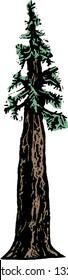 Vector illustration of redwood tree