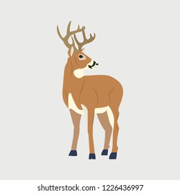Vector illustration. Reindeer on a white isolated background. Template for postcard, poster, web design.