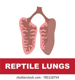 vector illustration of reptile schematic lung anatomy. perfect for educational purpose