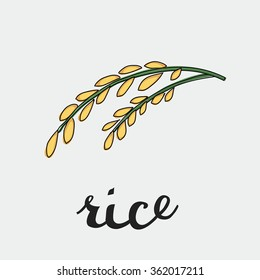 Vector illustration of ripe rye of rice with inking and lettering name in English