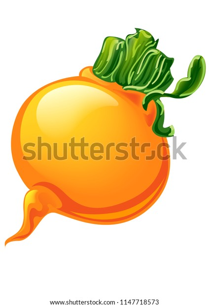 vector illustration root beet, yellow beet with tops