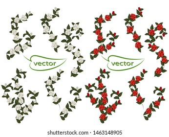 Vector illustration of rose braided climbing vines rose flowers red and white with dark green leaves for decoration