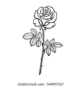 Vector illustration of roses. Line drawing. Coloring book.