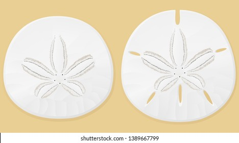 Vector illustration of sand dollars against a sand-colored background.