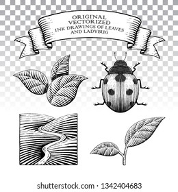 Vector Illustration of Scratchboard Style Ink Drawings of Leaves and Ladybug