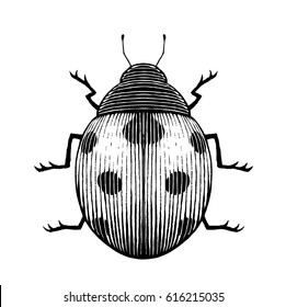 Vector Illustration of a Scratchboard Style Ink Drawing of a Ladybug