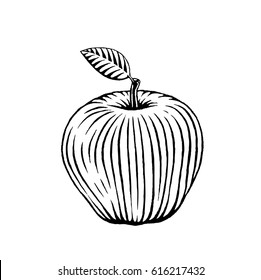 Vector Illustration of a Scratchboard Style Ink Drawing of an Apple