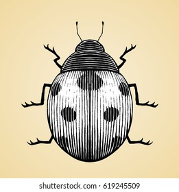 Vector Illustration of a Scratchboard Style Ink Drawing of a Ladybug with White Fill