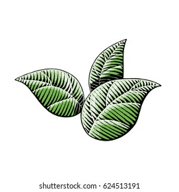 Vector Illustration of a Scratchboard Style Ink and Watercolor Drawing of Leaves