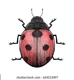 Vector Illustration of a Scratchboard Style Ink and Watercolor Drawing of a Ladybug