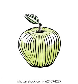 Vector Illustration of a Scratchboard Style Ink and Watercolor Drawing of a Green Apple