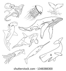 Vector illustration of sea animals. Sketch. Black outline. Isolated on white background.