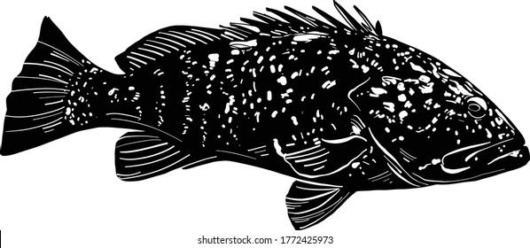 The vector illustration the sea fish grouper