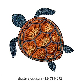Vector illustration of a sea turtle. Print on the sea theme
