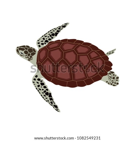 Vector Illustration Of A Sea Turtle Template For The Design Album Logo