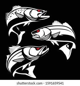 Vector illustration of seatrout redfish snook. Vector illustration can be used for creating logo and emblem for fishing clubs
