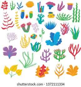 Vector illustration of seaweed. Algae living in the sea and in the ocean. Vector illustration of isolated objects.