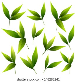Vector illustration of a set of beautiful green leaves