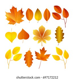 Vector illustration, set of bright autumn leaves.  Fall leaves background.