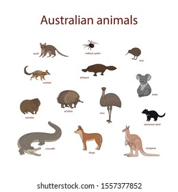 Vector illustration, set of cartoon cute Australian animals. Quoll, redback spider, kiwi, numbat, platypus, koala, wombat, echidna, emu, tasmanian devil, crocodile, dingo, kangaroo