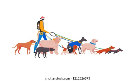 Vector illustration. Set cartoon style icons of dogs and personal dog-walker. Different breeds: basset hound, komondor, rhodesian ridgeback, golden retriever, dobermann, weimaraner, dachshund.