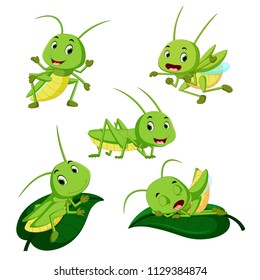vector illustration of set collection grasshopper cartoon