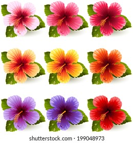 Vector illustration - set of colorful hibiscus flowers