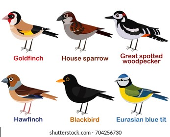 Vector illustration set of cute European bird cartoons - goldfinch, house sparrow, great spotted woodpecker, hawfinch, blackbird, blue tit.