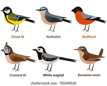 Vector illustration set of cute European bird cartoons - Great tit, Nuthatch, Bullfinch, Crested tit, White wagtail, Eurasian Wren