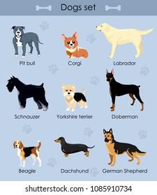 Vector illustration, set of cute funny cartoon dogs. Schnauzer, Pit bull, Beagle, Dachshund, German Shepherd, Corgi, Yorkshire terrier, Labrador, Doberman.