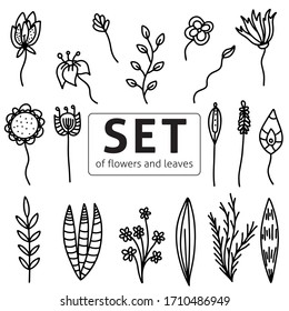 Vector illustration set of flowers and leaf doodle, doodling, zenart. Coloring for adult anti-stress. Black and white illustration vector isolated on white background. Spring. Summer.