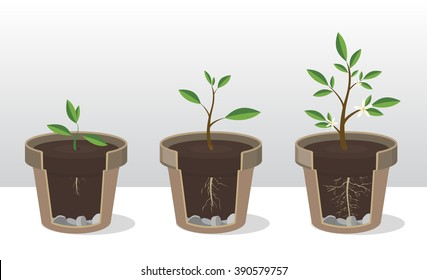 Vector illustration set of gardening elements. Seedling. Phases of growth of a plant with the roots and shoots. Rooted Sprout in flowerpot. Concept of  handled with care